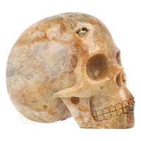 thumb-Fossiele koraal kristal schedel 312 gram-1