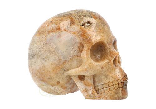 Fossiele kristallen schedel 312 gram