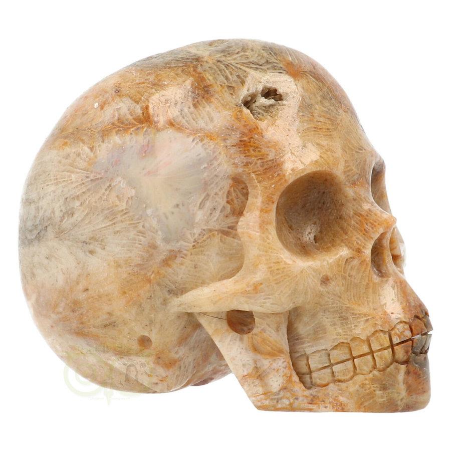 Fossiele koraal kristal schedel 312 gram-1
