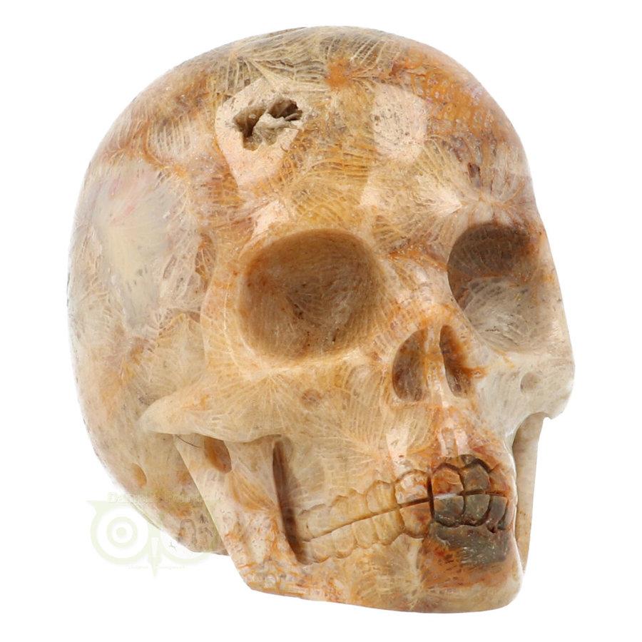 Fossiele koraal kristal schedel 312 gram-5