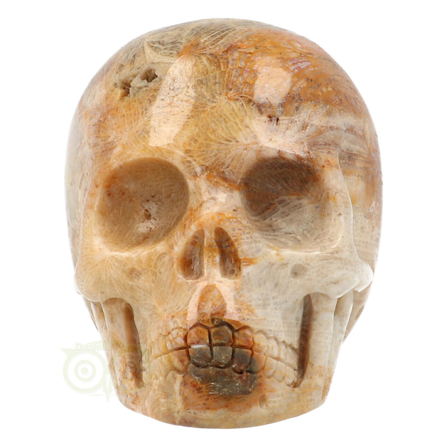 Fossiele koraal kristal schedel 312 gram-2