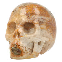 thumb-Fossiele koraal kristal schedel 312 gram-6