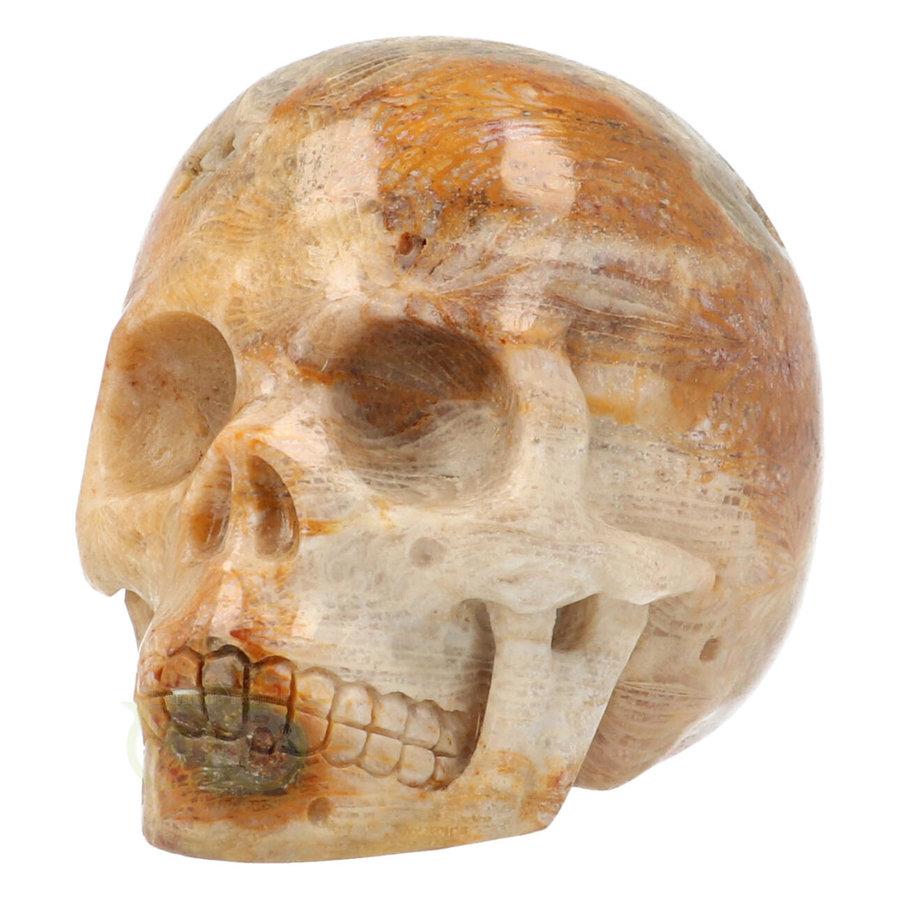 Fossiele koraal kristal schedel 312 gram-6