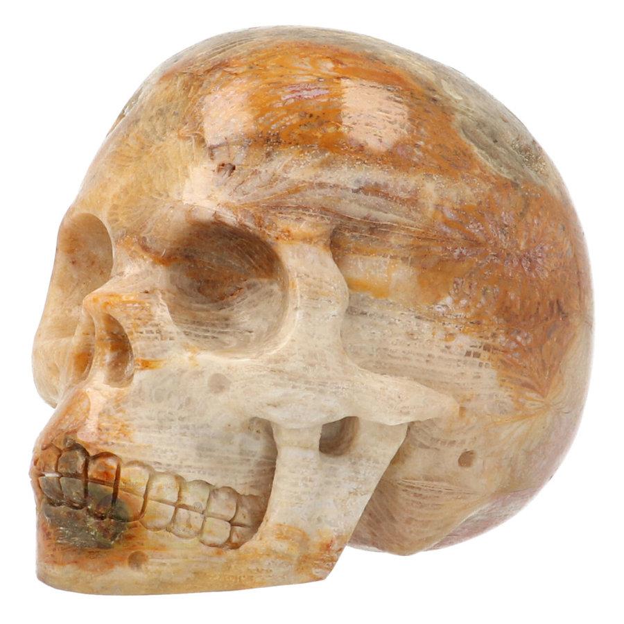 Fossiele koraal kristal schedel 312 gram-7