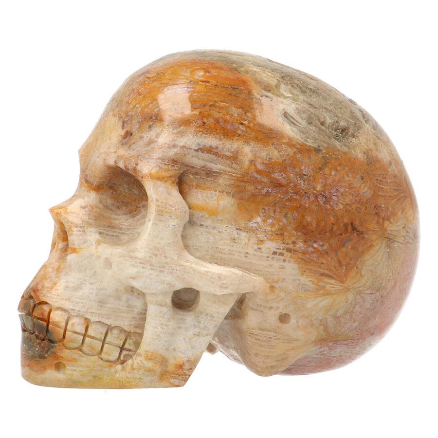 Fossiele koraal kristal schedel 312 gram-8