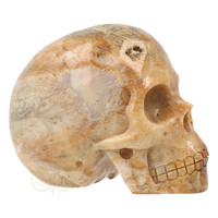 thumb-Fossiele koraal kristal schedel 312 gram-10