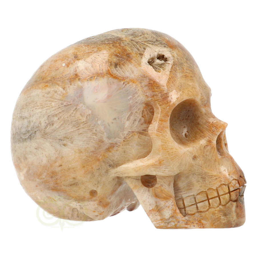 Fossiele koraal kristal schedel 312 gram-10