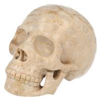 thumb-Fossiel koraal schedel  Nr. 199 - 721 gram-3
