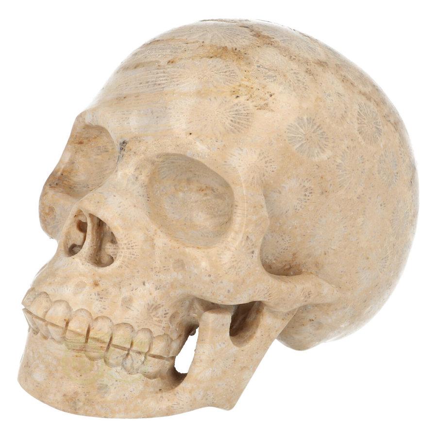 Fossiel koraal schedel  Nr. 199 - 721 gram-3