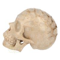 thumb-Fossiel koraal schedel  Nr. 199 - 721 gram-4