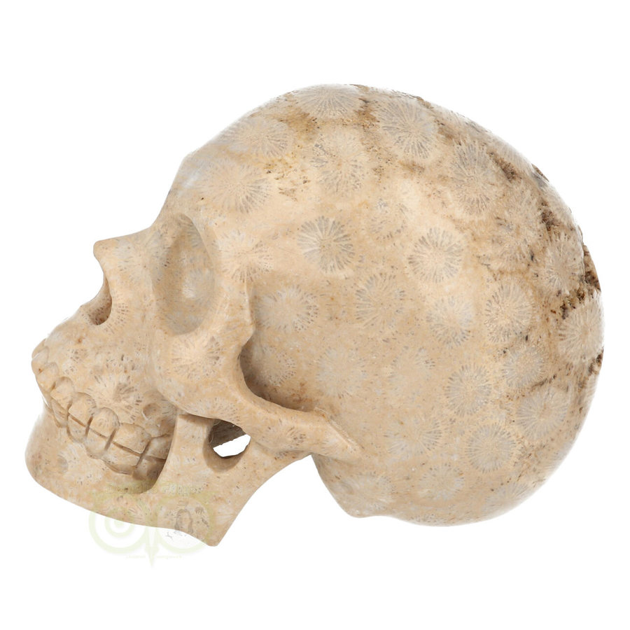 Fossiel koraal schedel  Nr. 199 - 721 gram-4