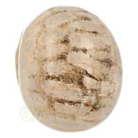 thumb-Fossiel koraal schedel  Nr. 199 - 721 gram-6