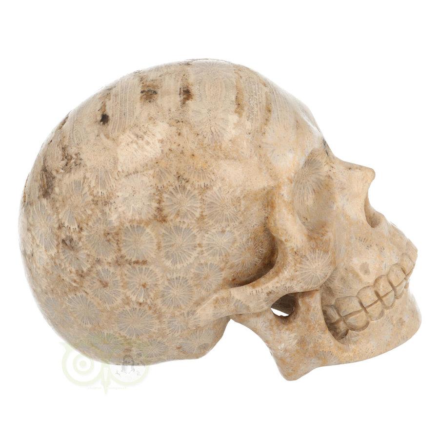 Fossiel koraal schedel  Nr. 199 - 721 gram-8