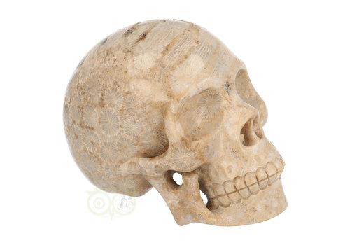 Fossiel koraal schedel 721 gram