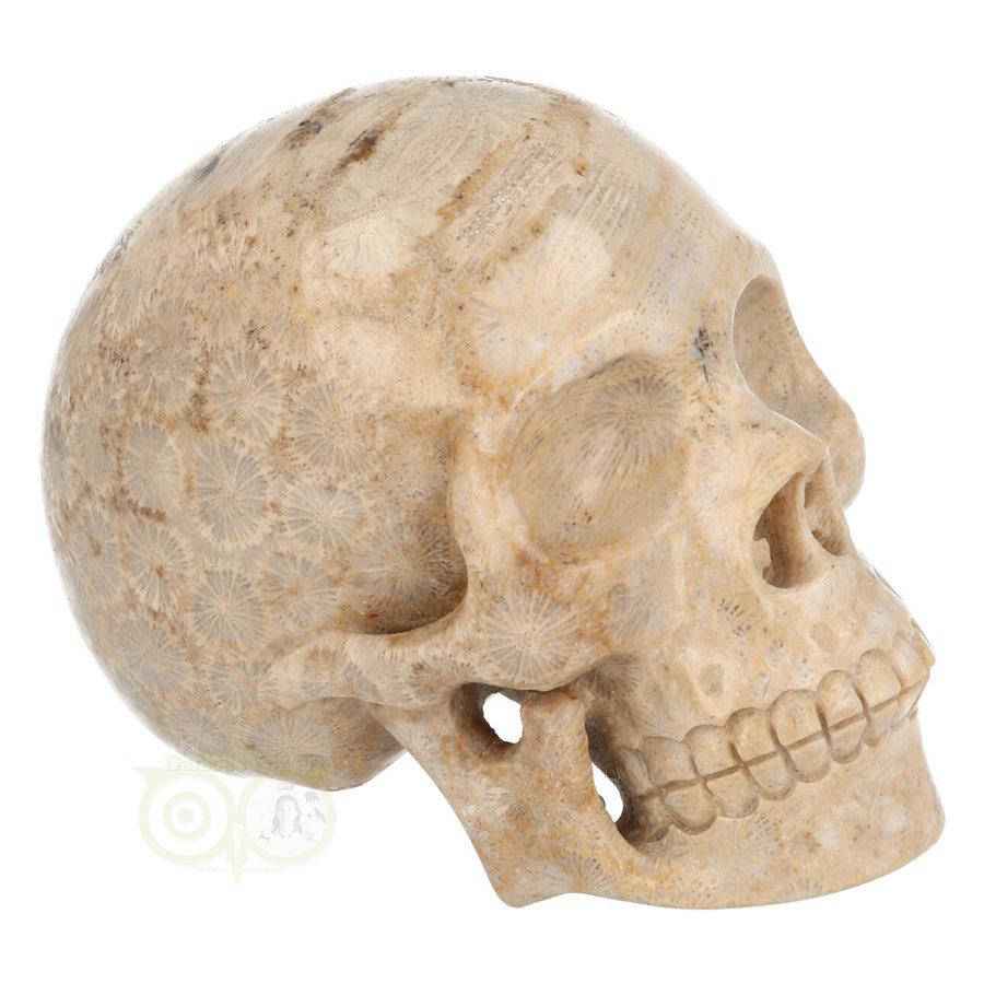 Fossiel koraal schedel  Nr. 199 - 721 gram-1