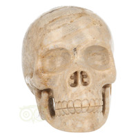 thumb-Fossiel koraal schedel  Nr. 199 - 721 gram-2