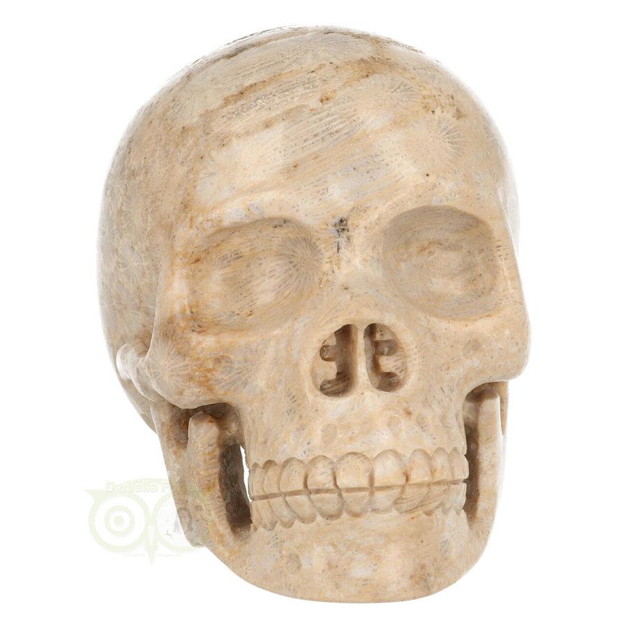 Fossiel koraal schedel  Nr. 199 - 721 gram-2