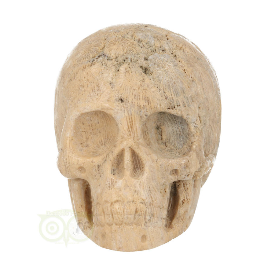 Fossiel Koraal Schedel 324 gram-3