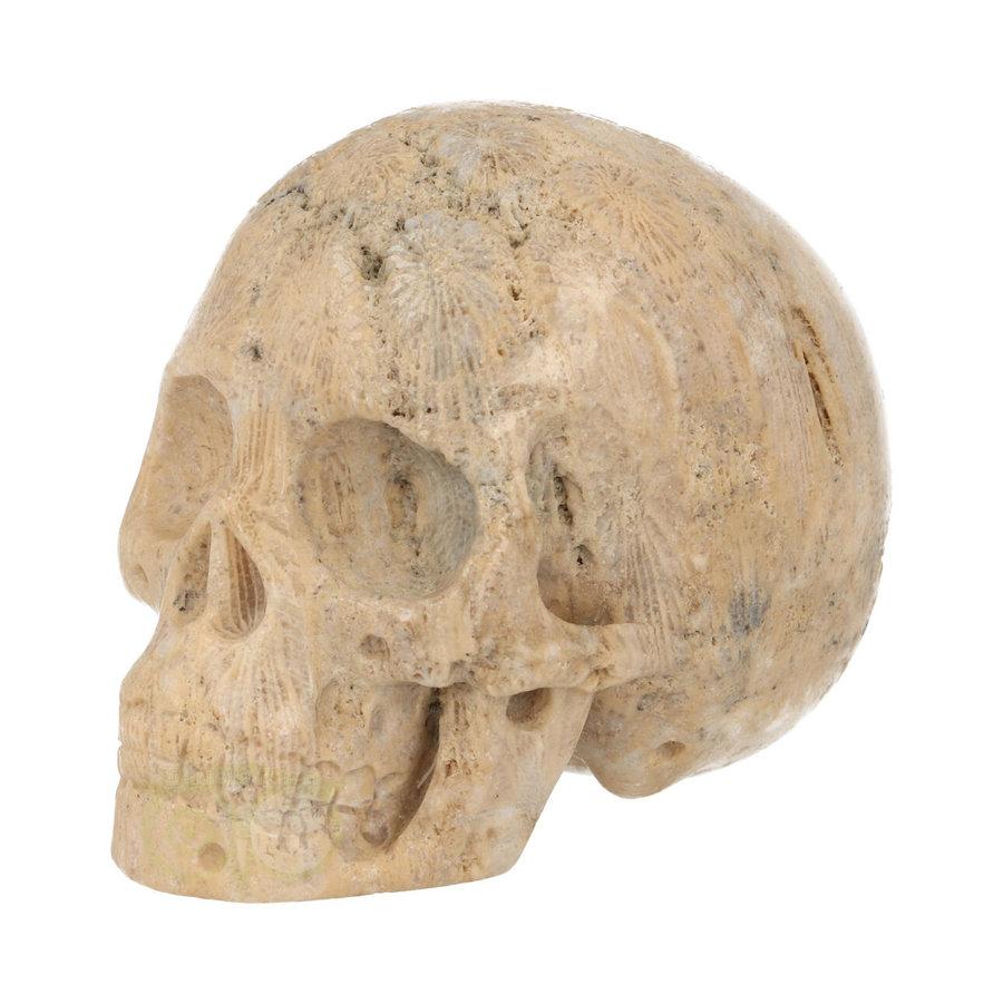 Fossiel Koraal Schedel 324 gram-4
