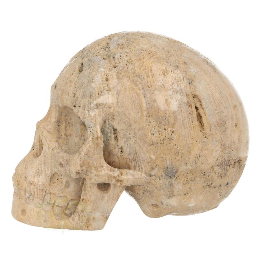 Fossiel Koraal Schedel 324 gram-5