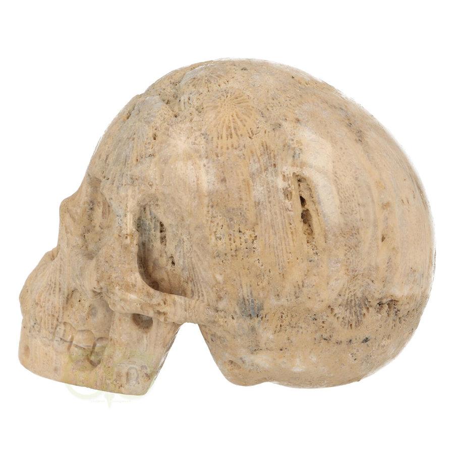 Fossiel Koraal Schedel 324 gram-6