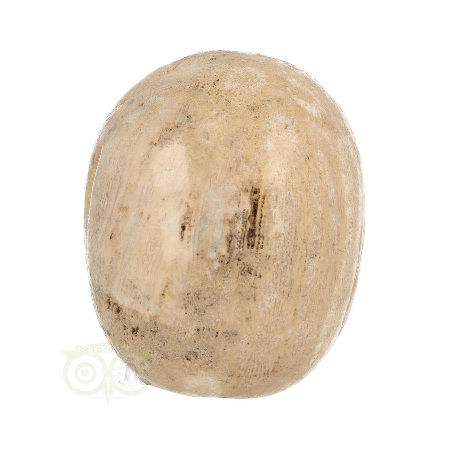 Fossiel Koraal Schedel 324 gram-8