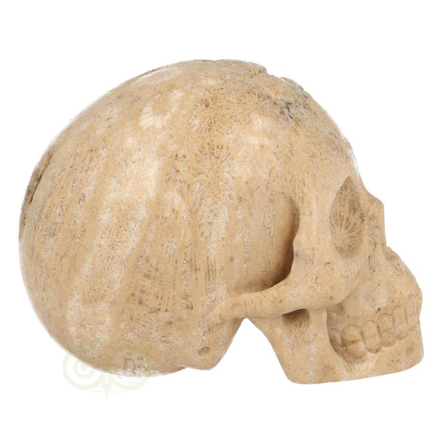 Fossiel Koraal Schedel 324 gram-10