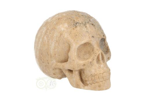Fossiel Koraal Schedel 324 gram