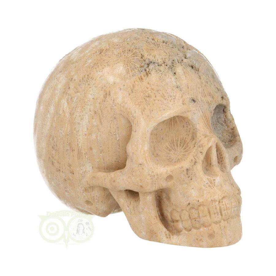 Fossiel Koraal Schedel 324 gram-1