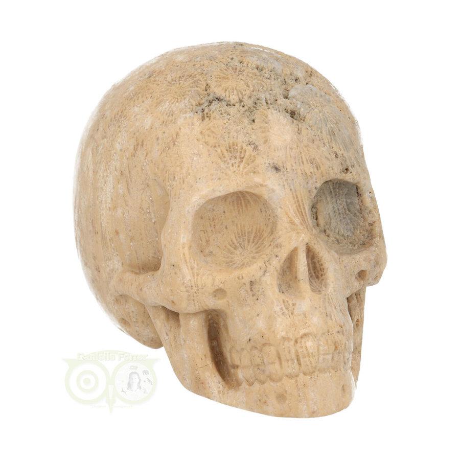 Fossiel Koraal Schedel 324 gram-2