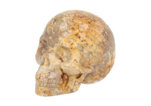 Fossiel Koraal Schedel 320 gram