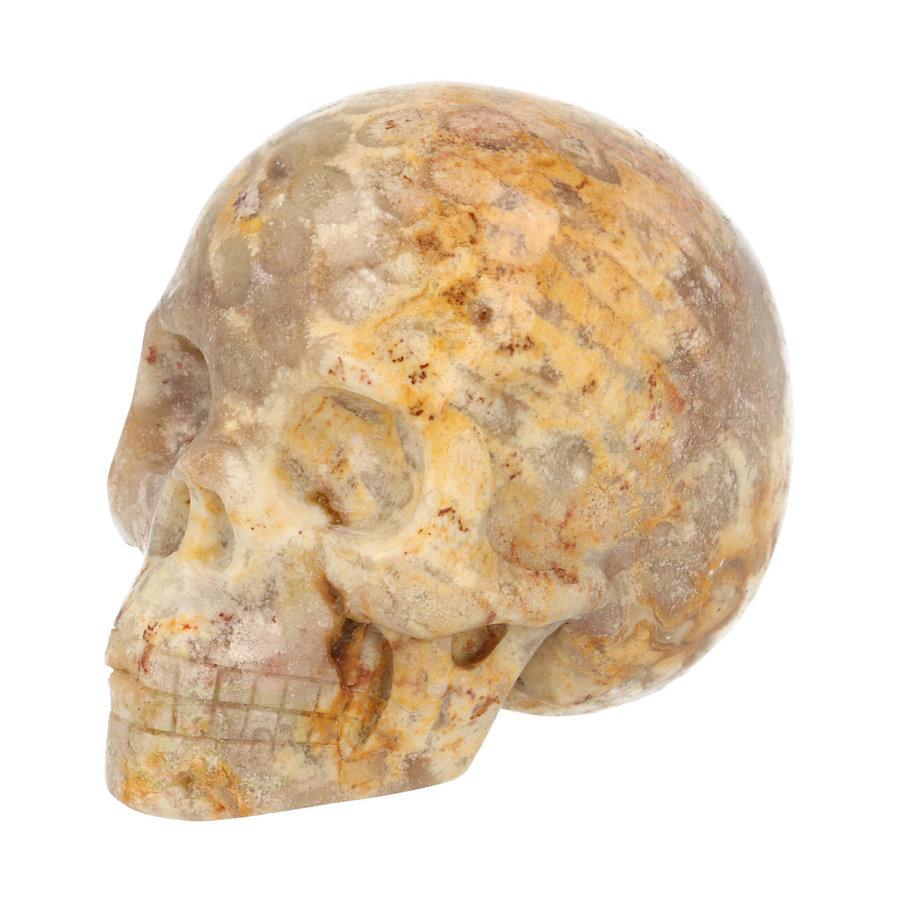 Fossiel Koraal Schedel 320 gram-1