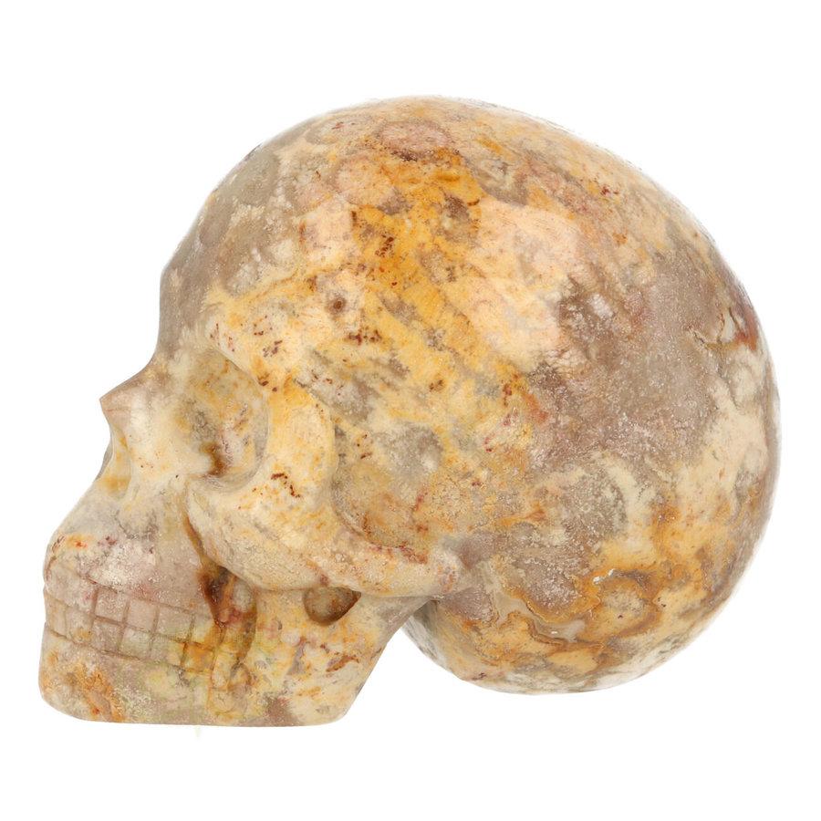 Fossiel Koraal Schedel 320 gram-3