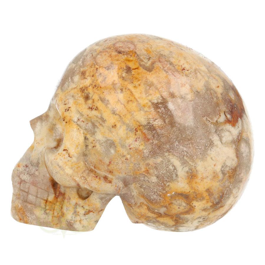 Fossiel Koraal Schedel 320 gram-4