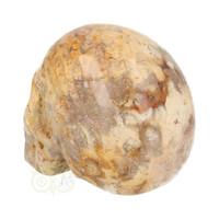 thumb-Fossiel Koraal Schedel 320 gram-5