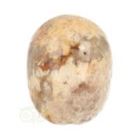 thumb-Fossiel Koraal Schedel 320 gram-6