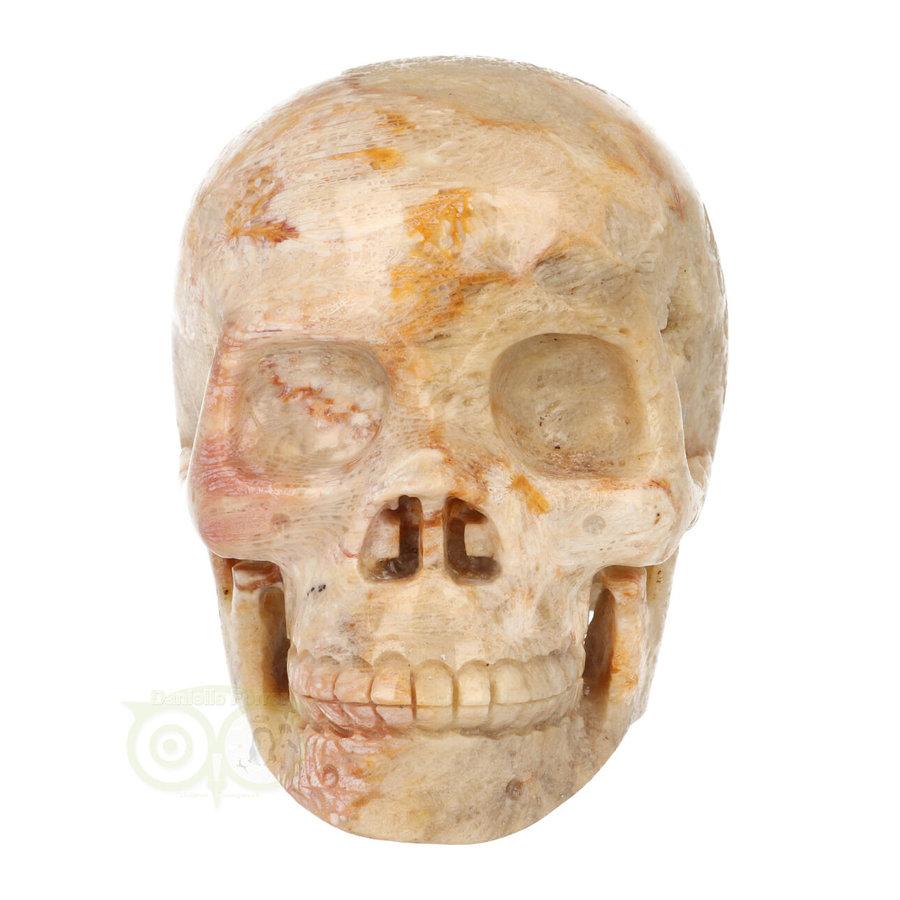 Fossiele koraal kristal schedel XL 614 gram-2