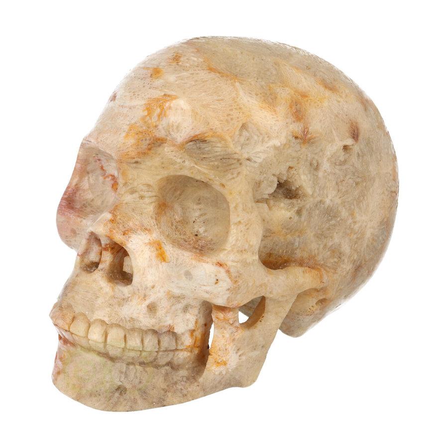 Fossiele koraal kristal schedel XL 614 gram-3