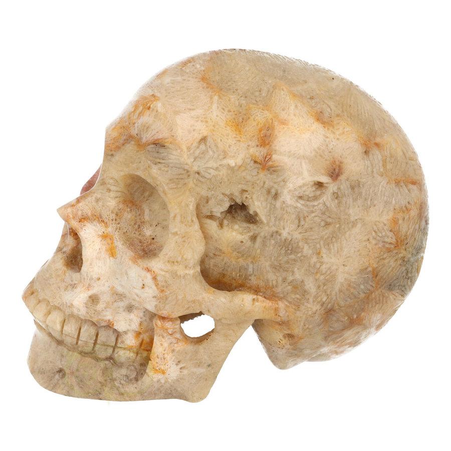 Fossiele koraal kristal schedel XL 614 gram-4