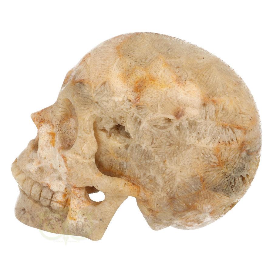 Fossiele koraal kristal schedel XL 614 gram-5