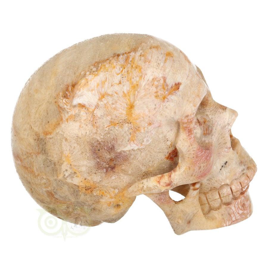 Fossiele koraal kristal schedel XL 614 gram-9