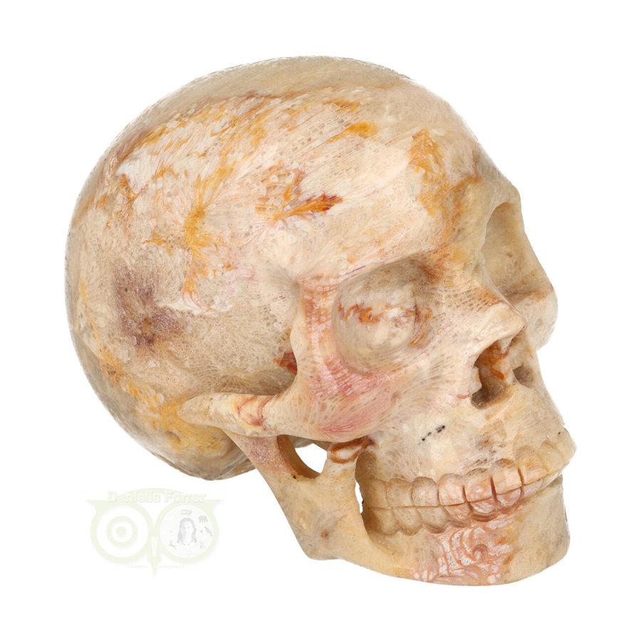 Fossiele koraal kristal schedel XL 614 gram-10