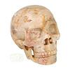 Fossiele koraal kristal schedel XL 614 gram