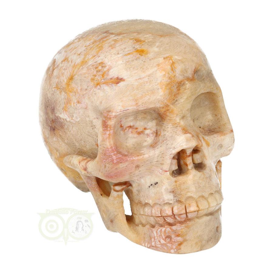 Fossiele koraal kristal schedel XL 614 gram-1