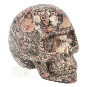 Crinoide schedel | zeelelie schedel | kristallen schedel | Edelstenen Webwinkel - Webshop Danielle Forrer