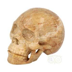 Fossiel koraal schedel | Koraal schedel | Kristallen schedel kopen | Edelstenen Webwinkel - Webshop Danielle Forrer