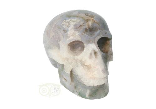 Mosagaat schedel 1,047 kilogram