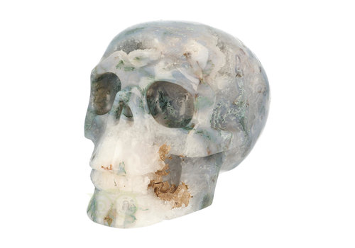 Mosagaat schedel 1.4 kg