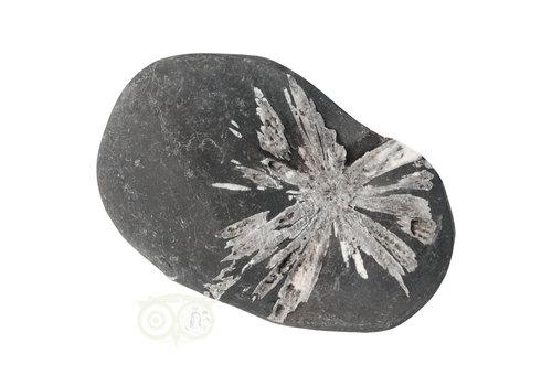 Chrysanthemum steen (Flower Stone) Nr 3