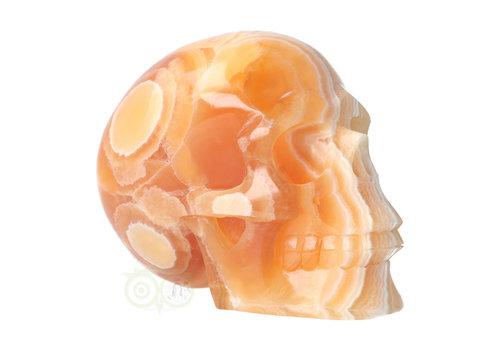 Calciet schedel 2 kg